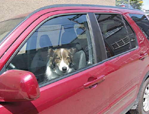 Dogs in Hot Cars!