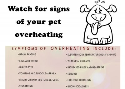 Symptoms of overheating image
