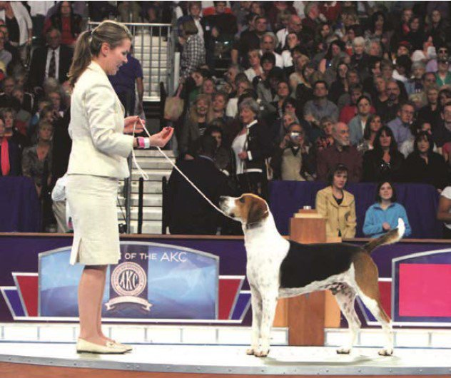 Exhibitor with her dog showing at the dog show.